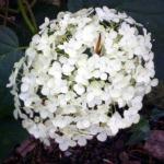 flor geocrom-OK