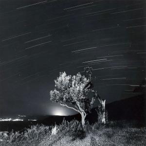 ARBRE-Llum-28b