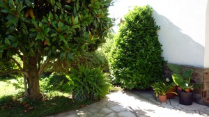 CSIS jardí entrada casa