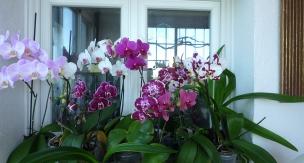 orquideas invernadero