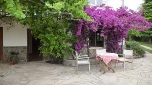 exterior- cursos- Marta_Povo- escuela- CSIS Jardín- Geocrom- Sanación