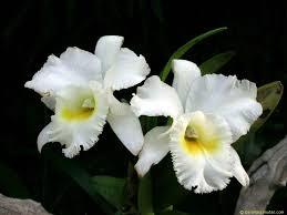 orquideas Geocrom 2